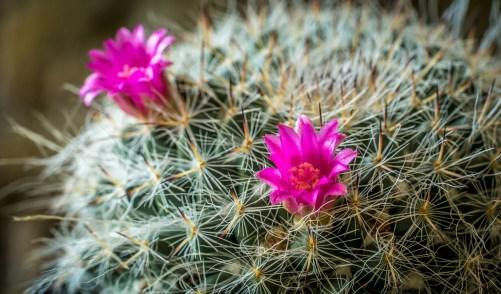 pink flowered