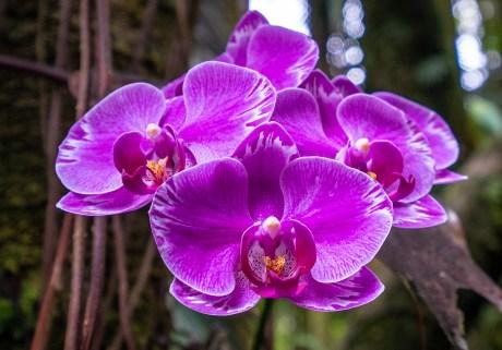 Purple Orchid 2