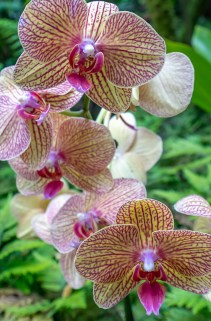 Purple Veined Orchids
