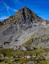 Ibex and Mountain