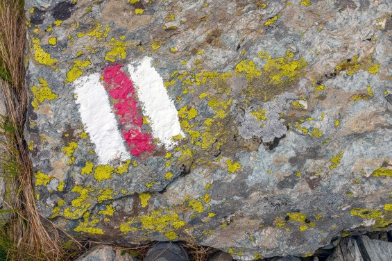 Lichen and Marker