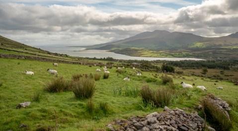 Rural Landscape Dingle Peninsula 2