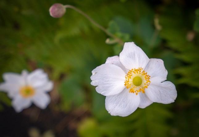 White Yellow Flower