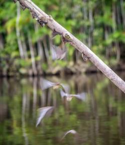 bats takeoff (1 of 1)