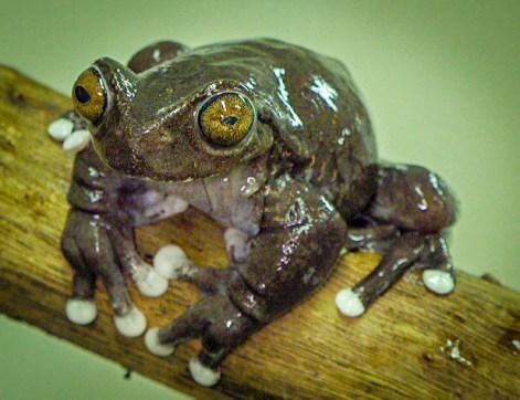 black frog (1 of 1)