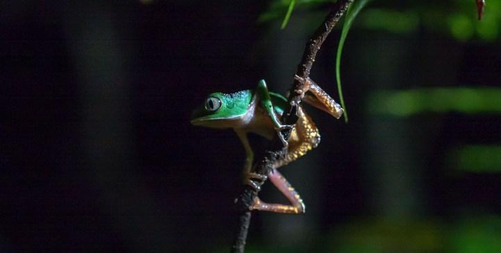 Frog-CU