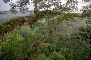 Jungle Foliage