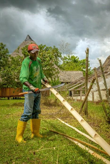Man Cutting Bamboo