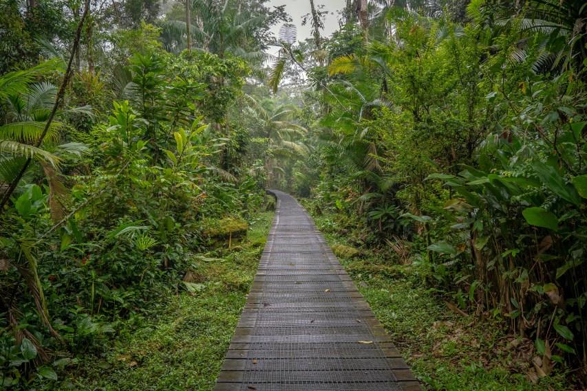 Boardwalk path
