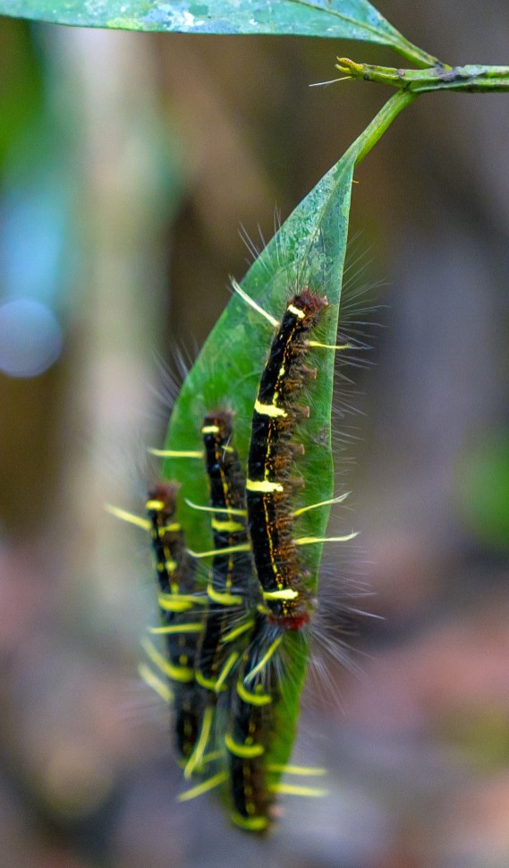 Caterpillars on Leaf