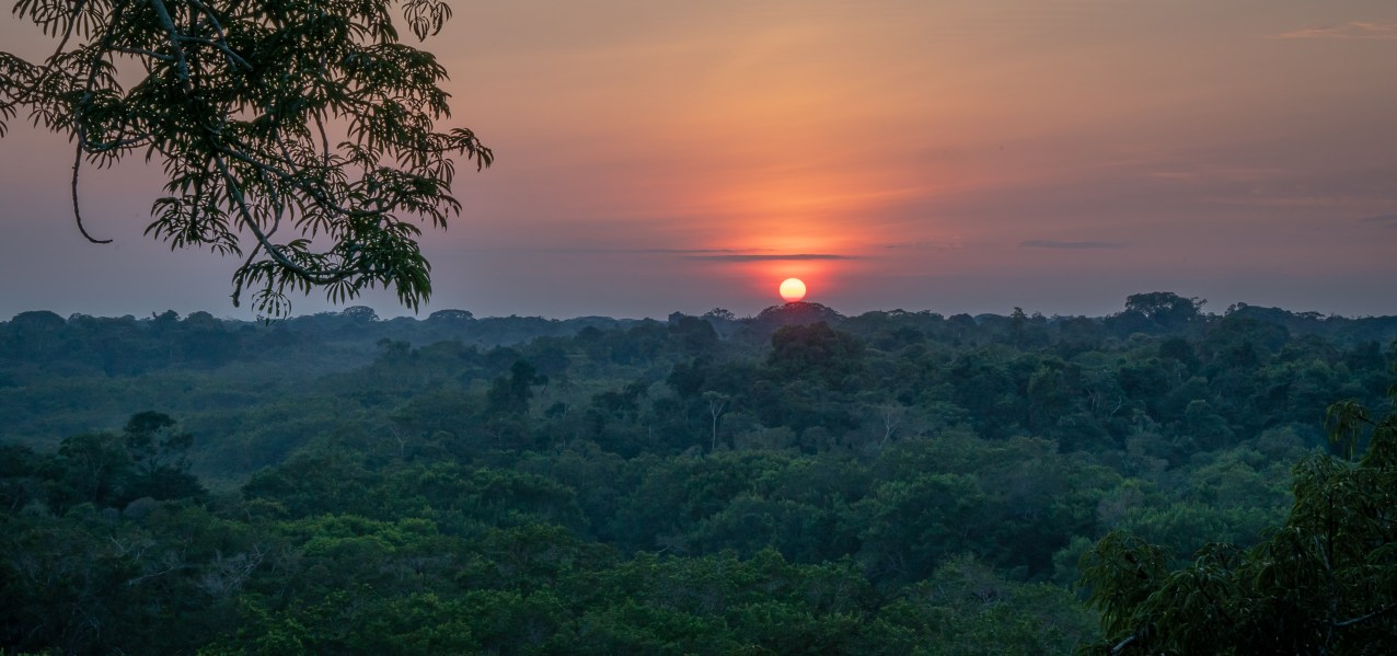 Jungle Sunset