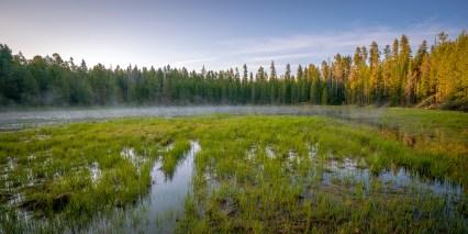 Mist on the Bog