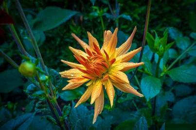 Glistening-Flower