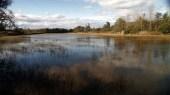 Dombes, des étangs et des hommes