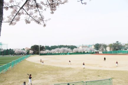 Baseball players beneath the Korean cherry blossom trees in Jeju City