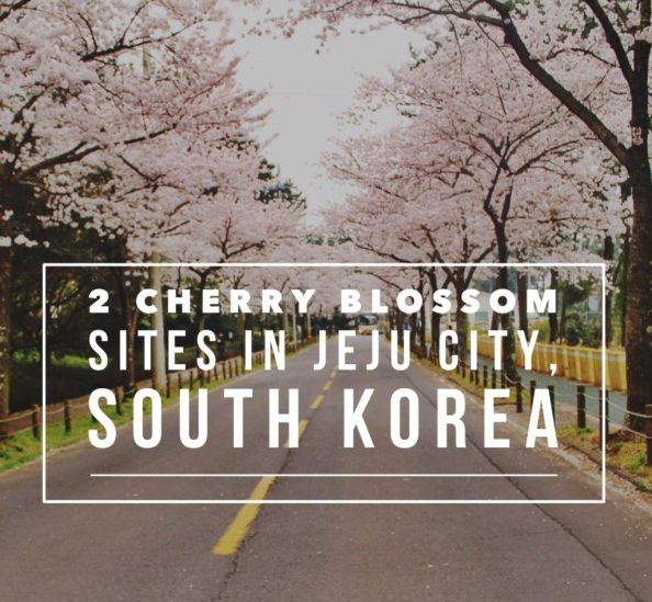 Korean Cherry Blossom sites in Jeju City, Jeju Island to enjoy spring in Korea