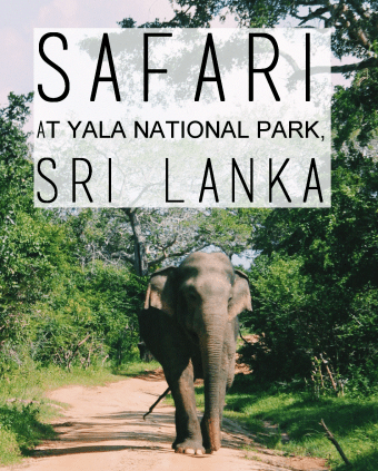 Safari at Yala National Park, Sri Lanka -title