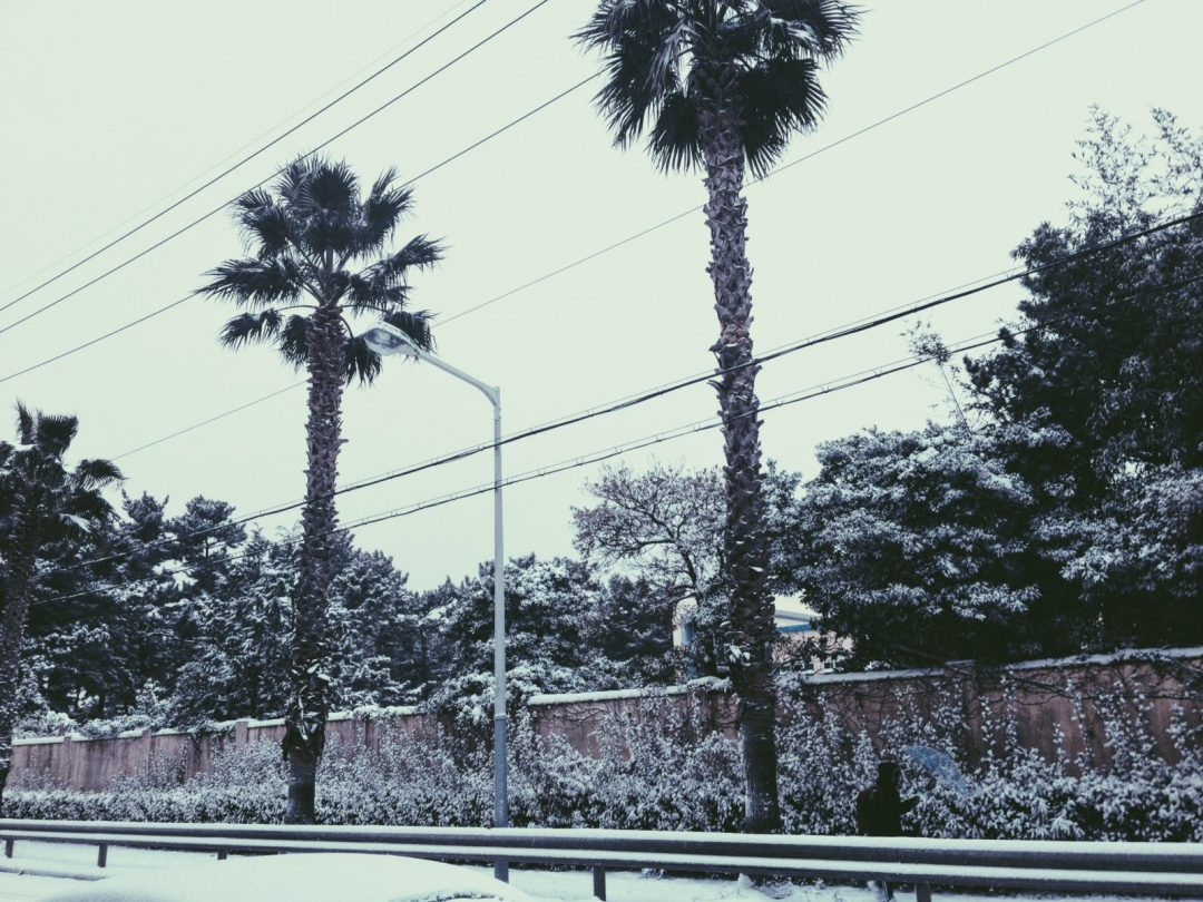 Icy white palm trees