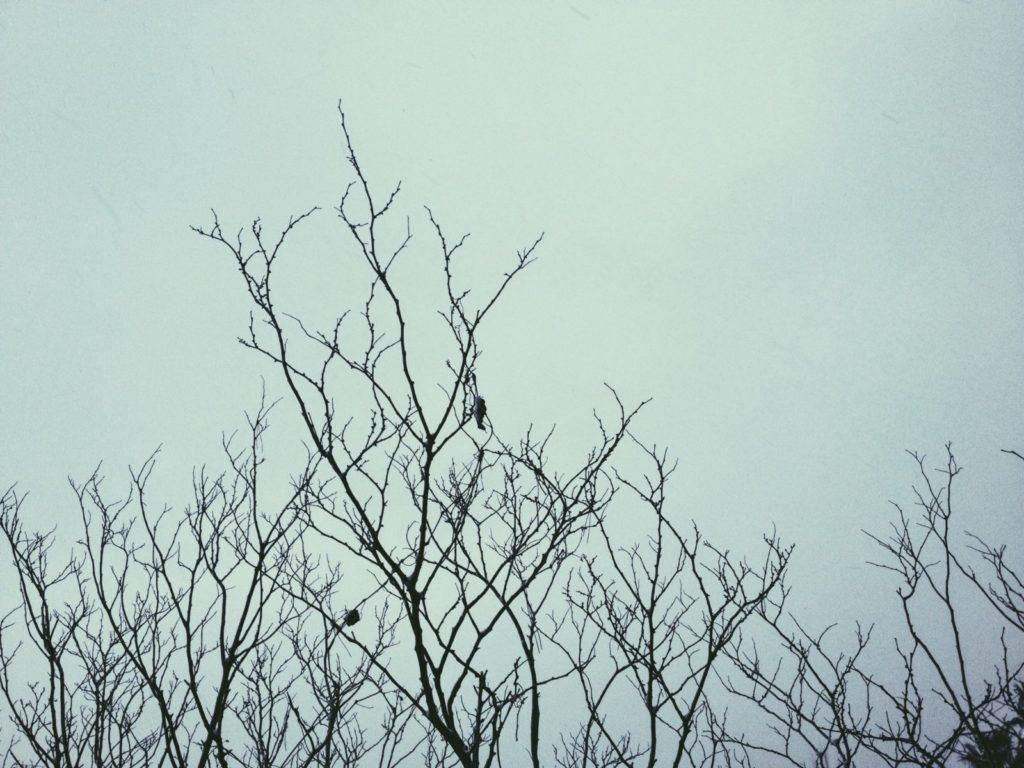 Jeju Island Winter: Record-Breaking!