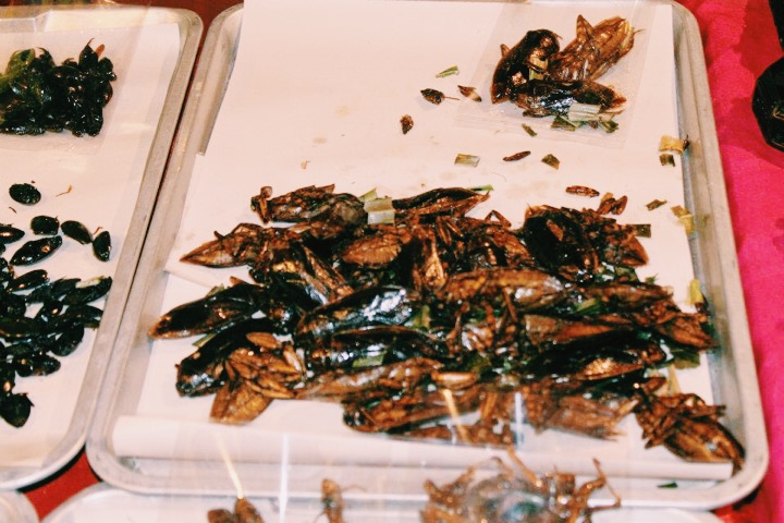 Fried roaches, Chiang Mai, Thailand