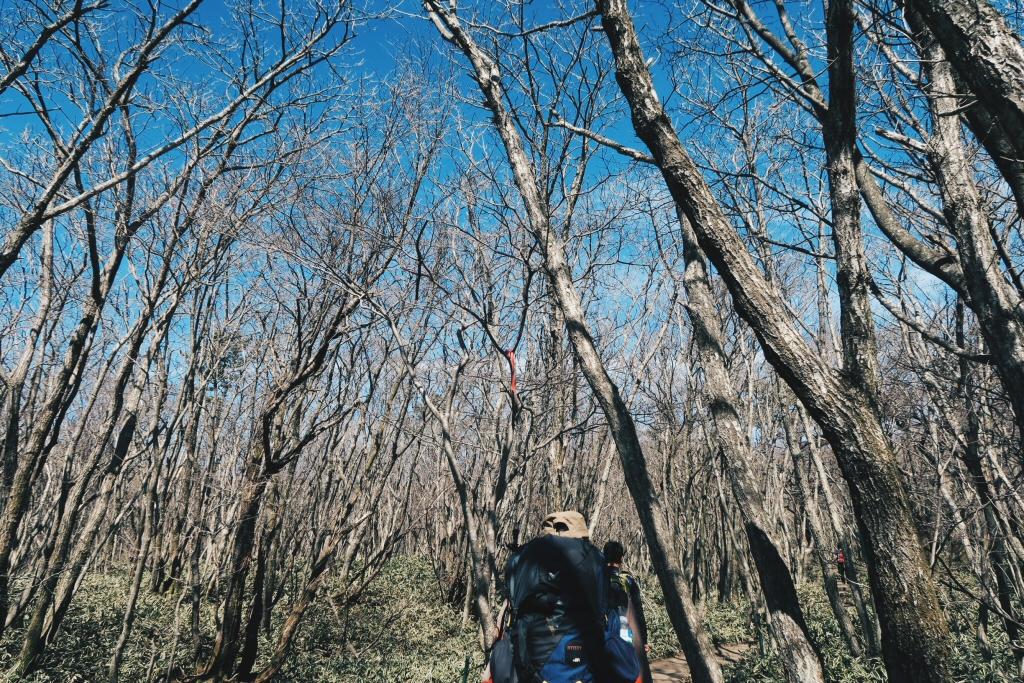 Climbing Halla Mountain, Jeju Island in Early Spring