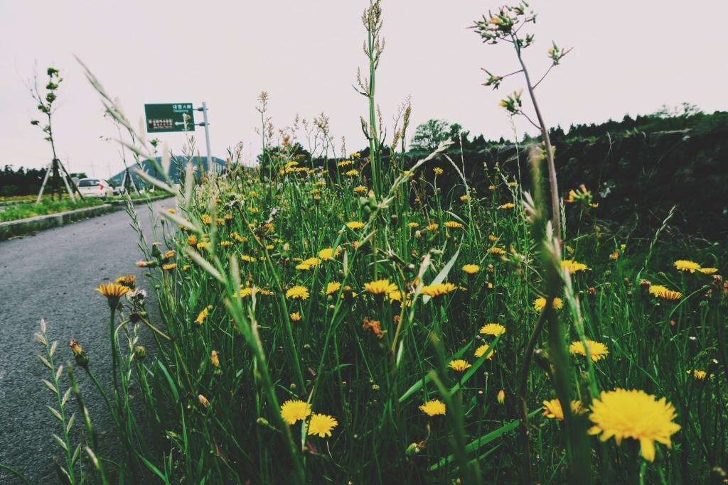 Walking to O'Sulloc on Jeju Island