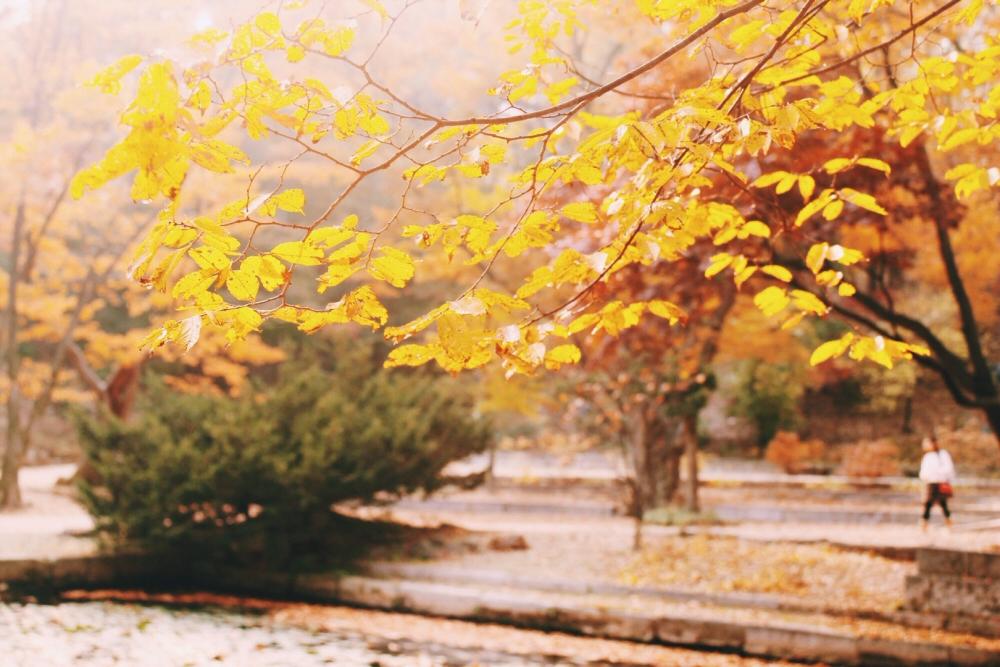 South Korea autumn Changdeokgung