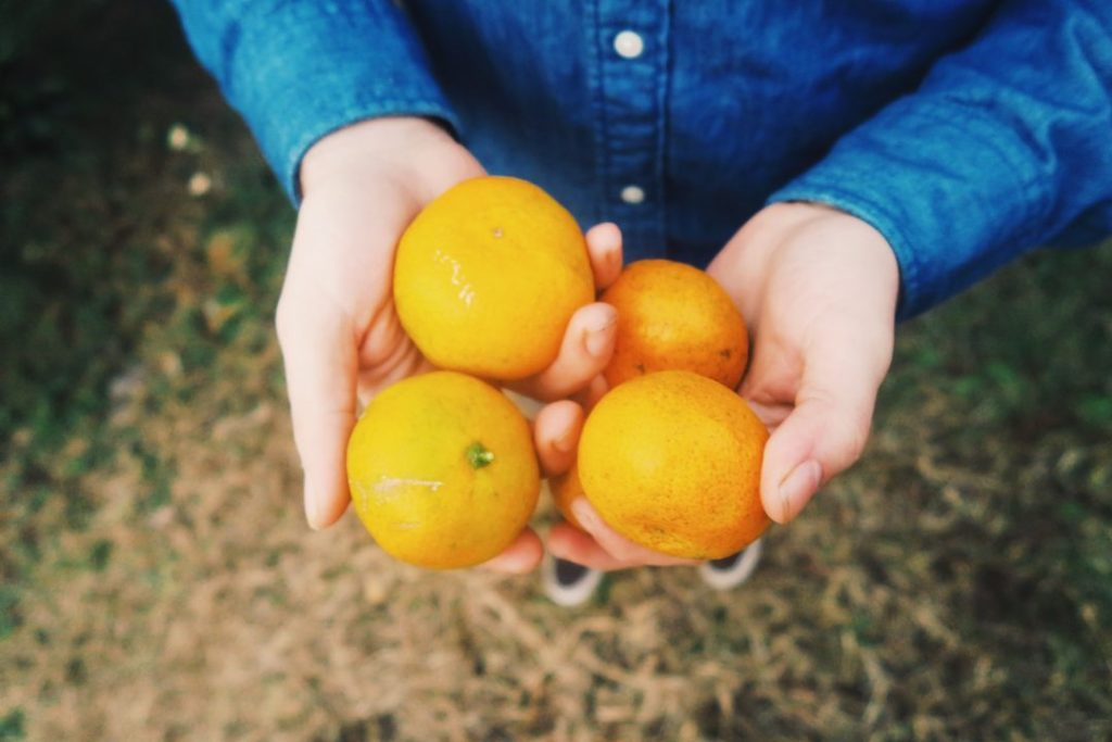 Jeju Tangerine Farm Picking, Jeju Island, South Korea