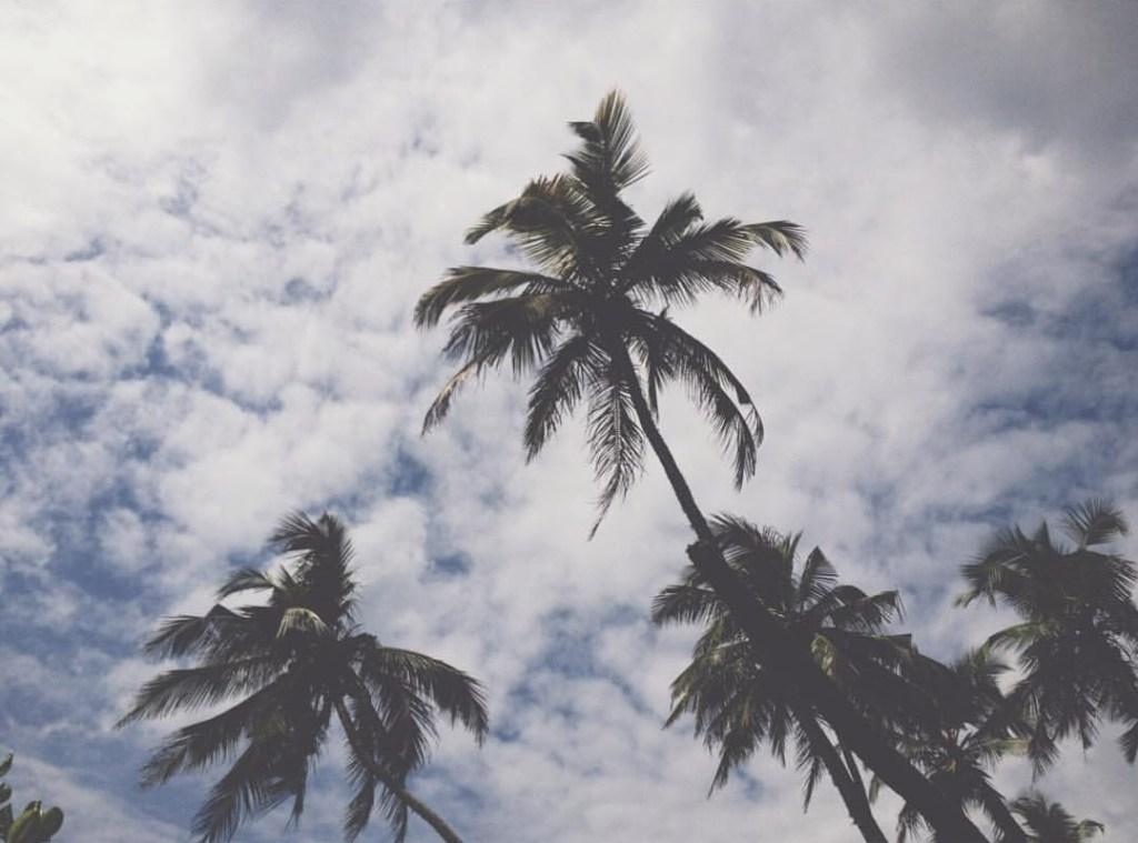 Mirissa Beach Party, Palm Trees