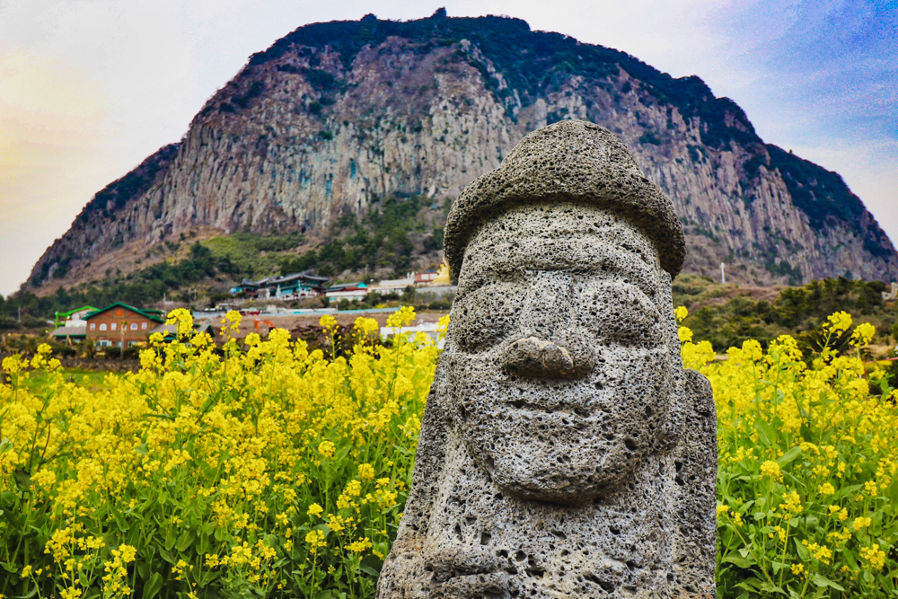 Mount Sanbangsan on Jeju Island, South Korea in the spring is covered with vibrant canola flowers