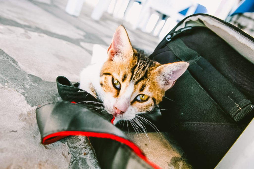 Everything you need to know for international pet travel and taking pets abroad!
