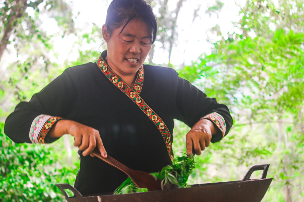 Learning how green tea is made at Araksa Green Tea Garden, a fun Thailand tourism activity