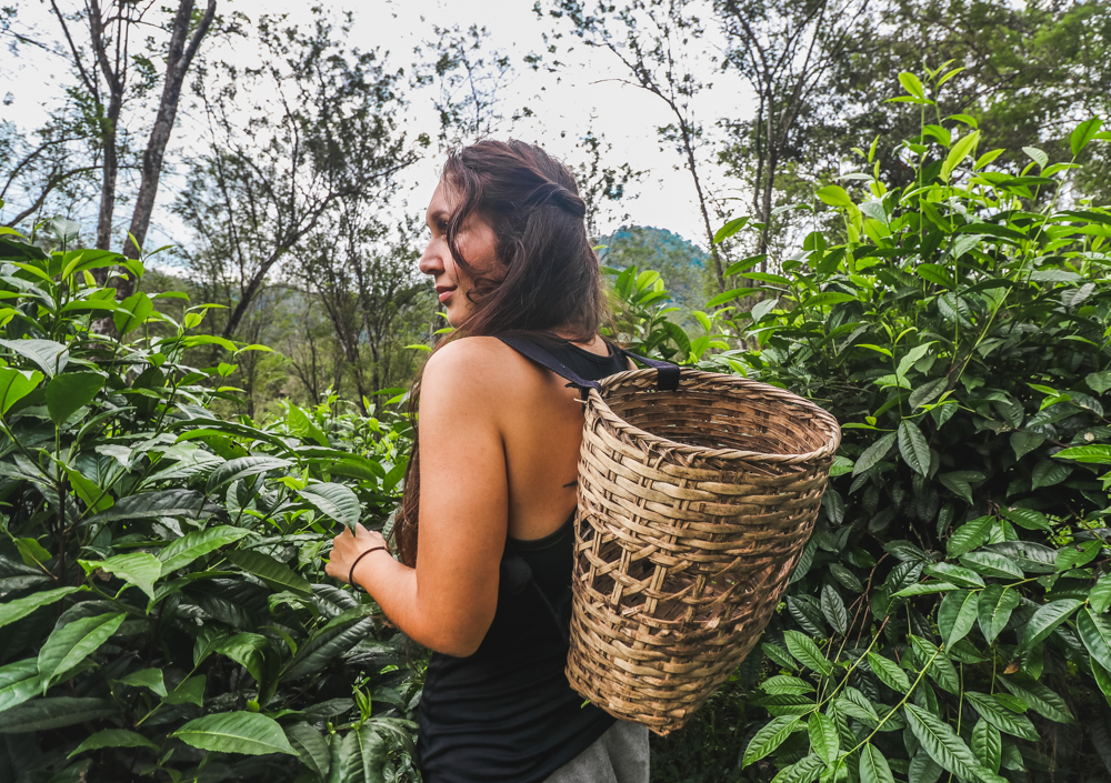 Lauren at Araksa Tea Garden, one of Chiang Mai points of interest