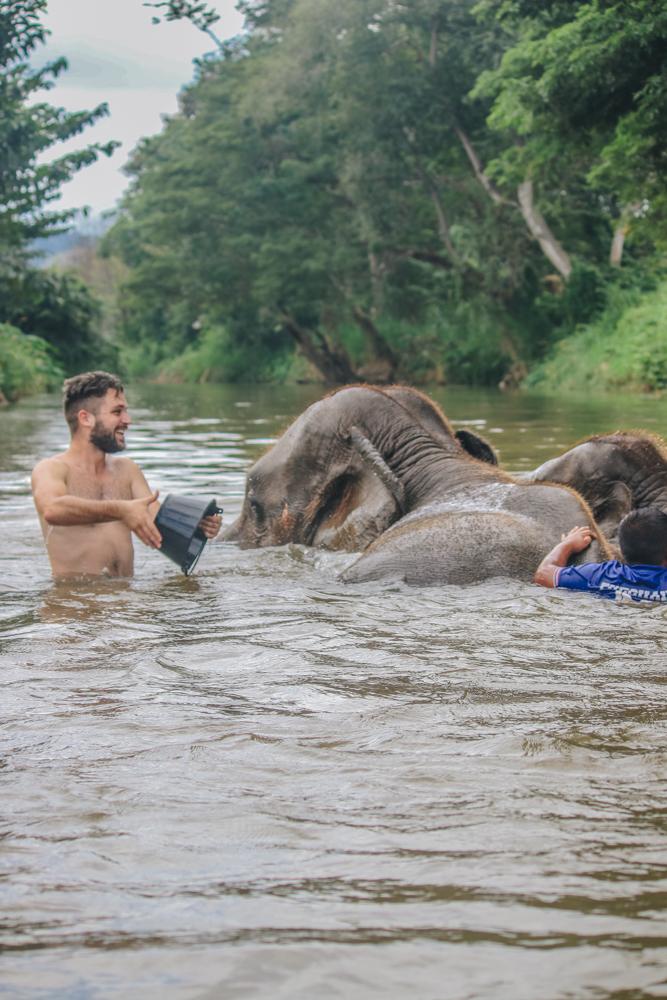 Bathing elephants in Thailand river