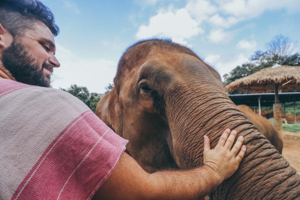 Chiang Mai elephant