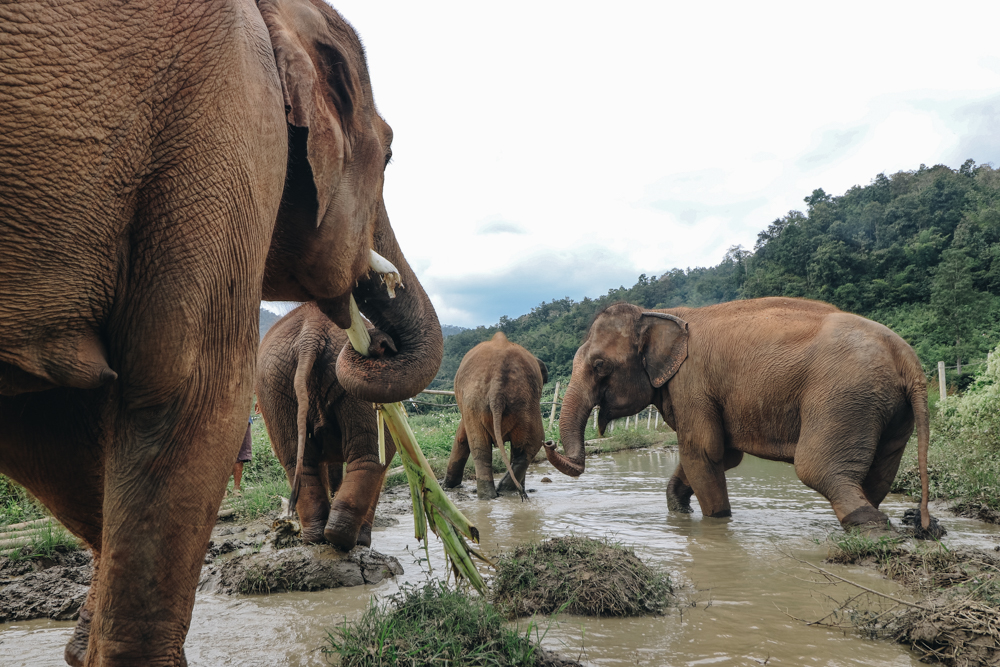 Ethical Thailand elephant care