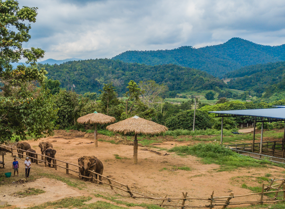 Happy Elephant Care: Chiang mai experience in Thailand