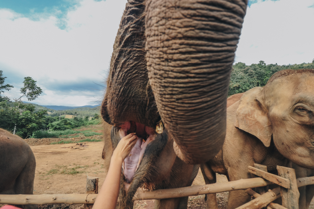 Taking care of elephants in Thailand