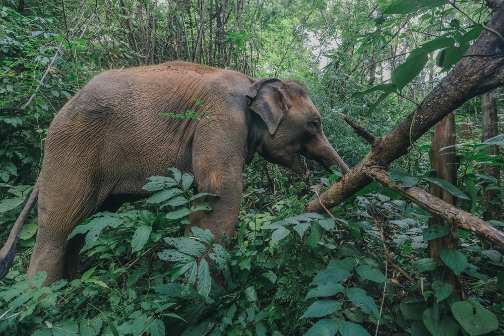 Thailand elephant experience in Chiang Mai