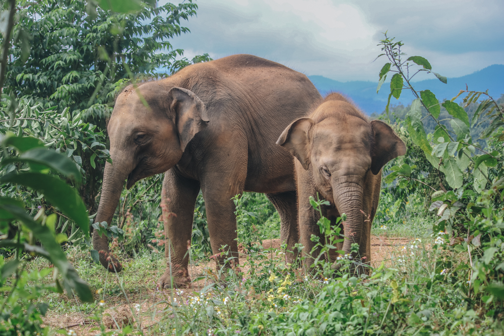 Thailand itinerary - visit elephants in Chiang Mai