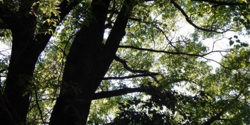 cropped-dscn1259.jpg