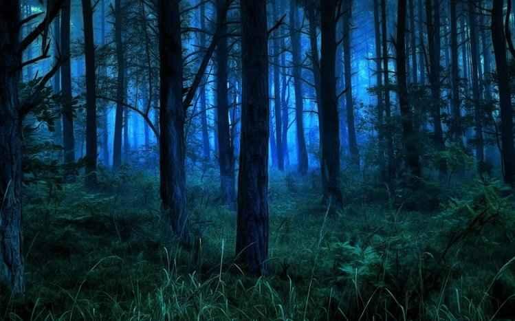 night-forest-theme-vx14