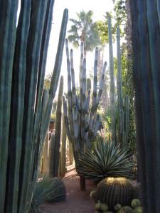 jardin majorelle kaktus