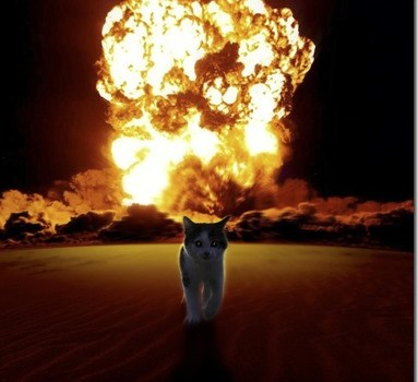Action Cat Walks Away From Explosion
