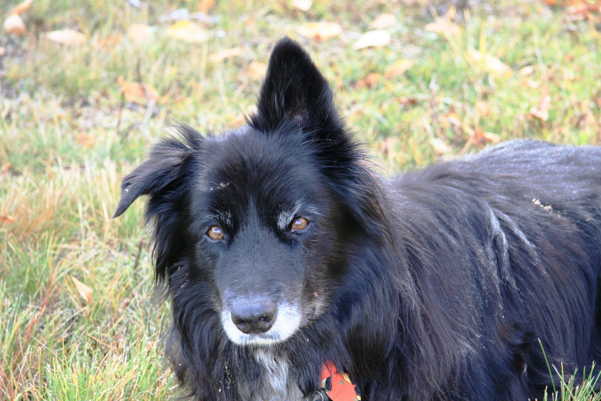 Aldasoro Ranch Now Allows Dogs!