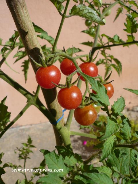 plantas silvestres  Espacio de Telma