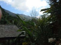 Viewvto coffee plantation and mountains