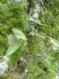Ferns on monster rock
