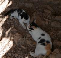 Mum and kitty