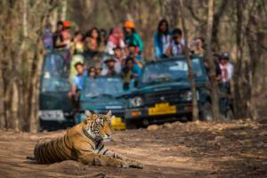 national parks near bangalore: These are some of the most amazing sanctuaries near Bangalore …